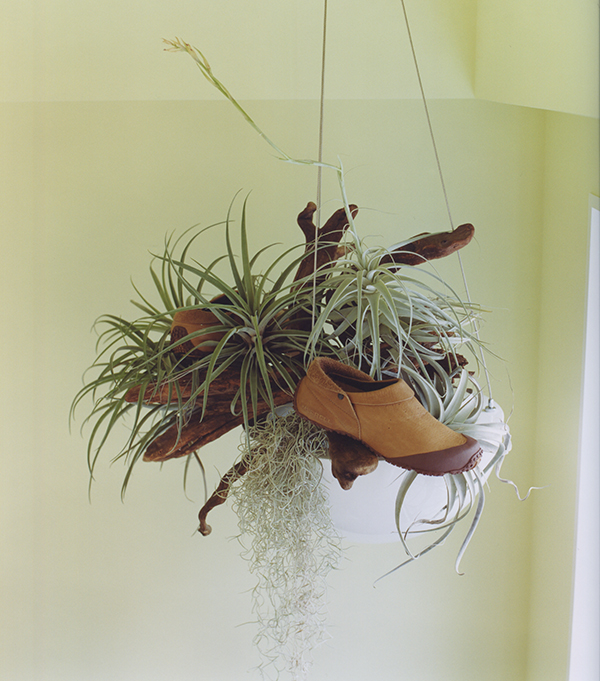 merrell plants